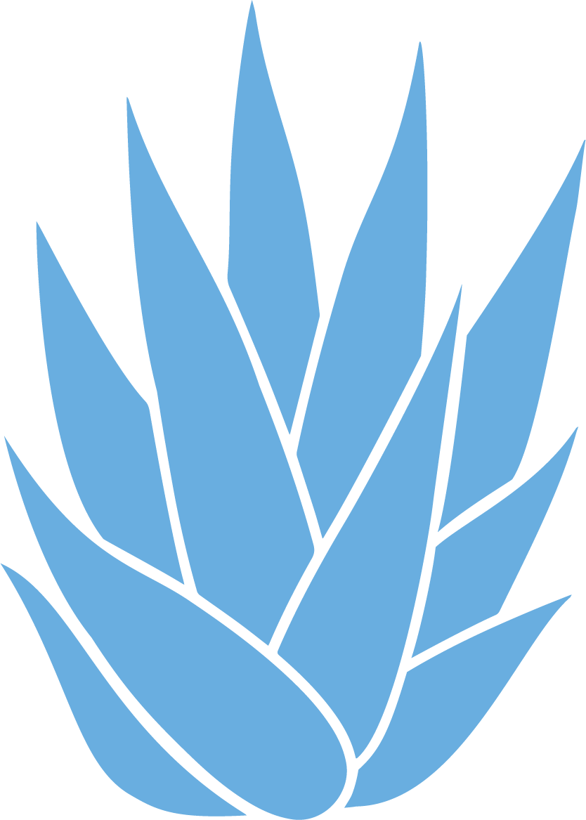 agave-lightblue